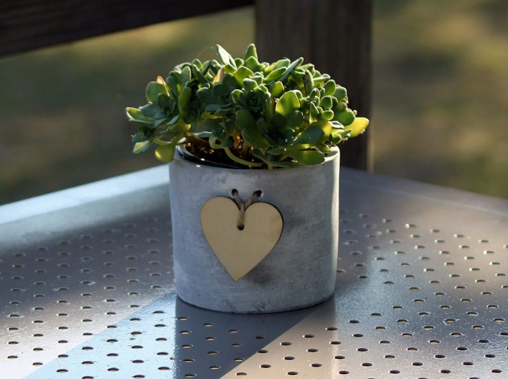 wedding trends succulents plants