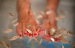 Pedicure from small fishes