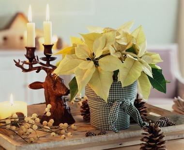 Χριστουγεννιάτικη Διακόσμηση με Αλεξανδριανό