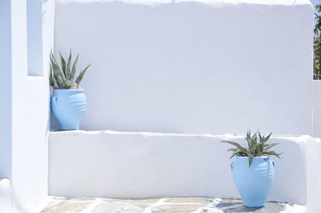 Γάμος στην Κρήτη Crete green potted plant on white concrete wall