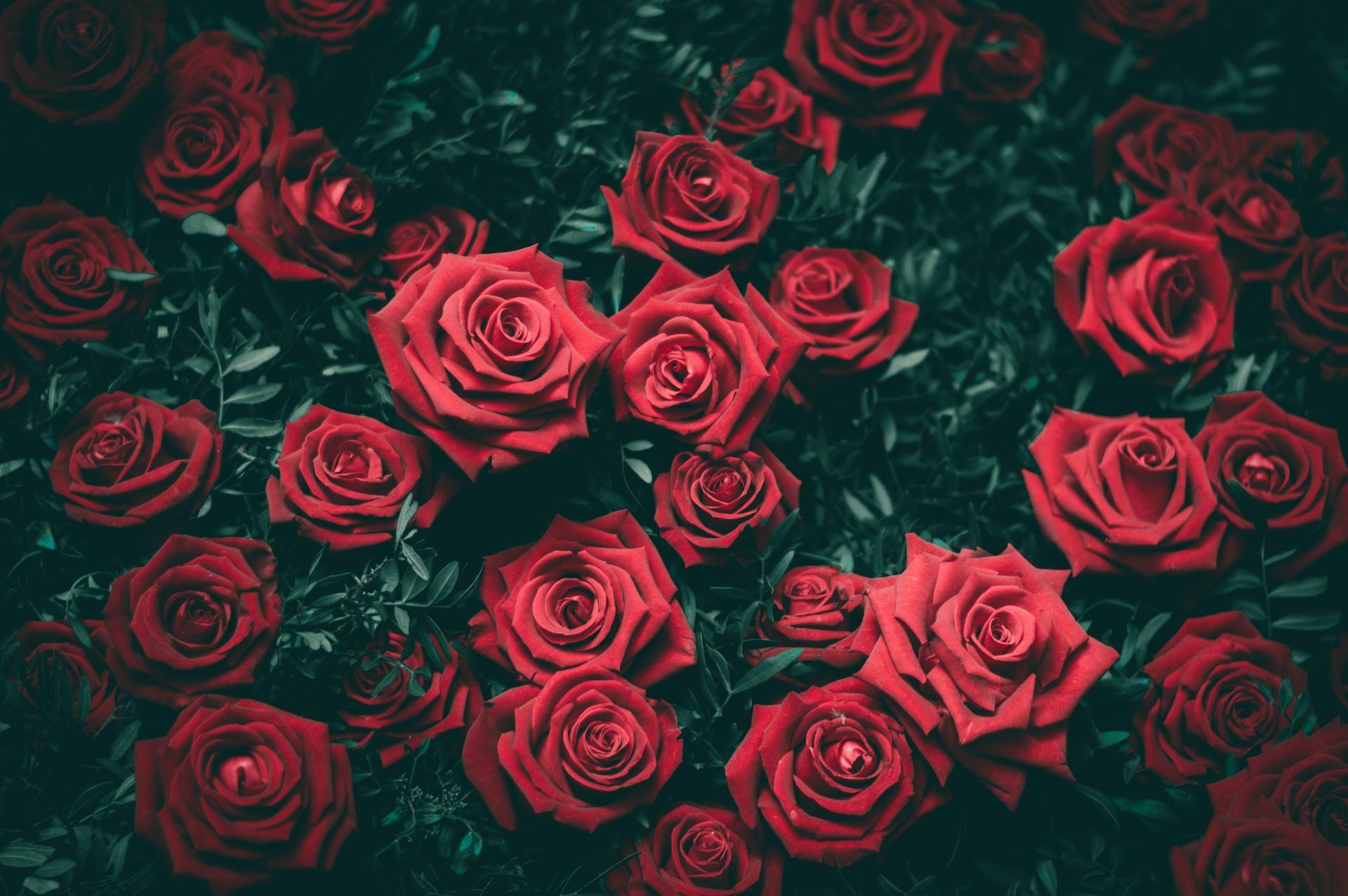 όλα για τα τριαντάφυλλα