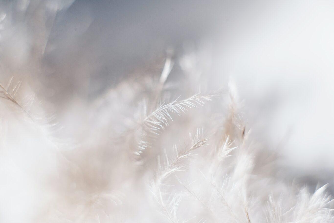 φτερά και πούπουλα